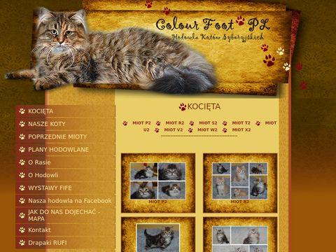 Hodowla kotów syberyjskich - kocięta syberyjskie