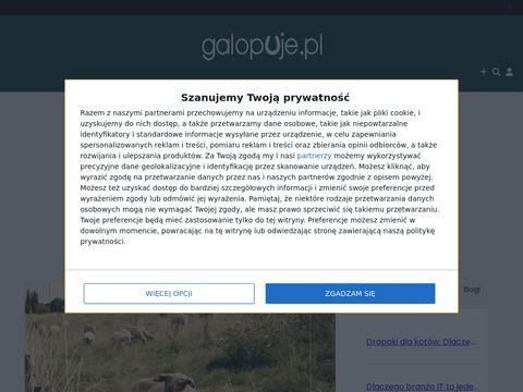 Galopuje.pl - wszystko o koniach