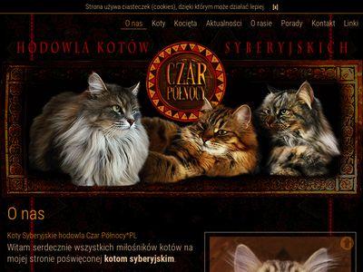 Hodowla kotów syberyjskich czar północy*pl